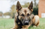 Donate to the K-9 Program
